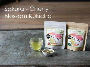 Sakura – Cherry Blossom Kuckicha